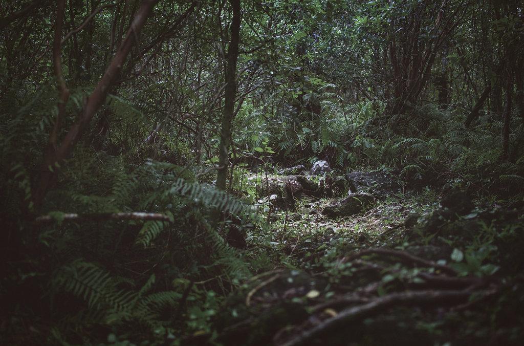 Paysage de la Réunion